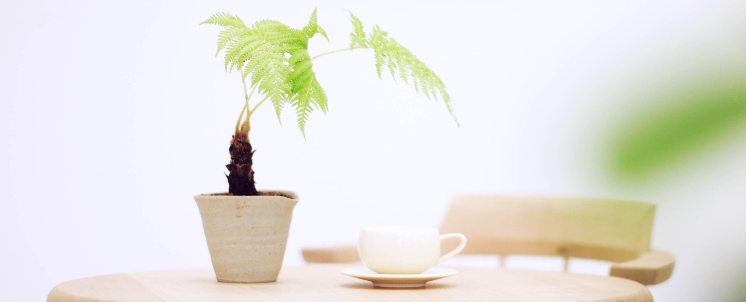 コーヒーカップとグリーン